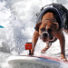 "Surf City Surf Dog Competition 另類 ""帥氣"" 衝浪高手 (9/26 – 9/28)"
