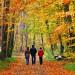 來個秋季小旅遊吧! 南加的這5個地方都會讓你沉迷於秋天的美景!