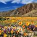 又到了一年一度春花攝影大賽,如果沙漠配上花海你會不會喜歡呢?