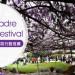 【LA樂媽】Sierra Madre Wistaria Festival紫藤花節 + 樂媽私房行程推薦 (3/18)
