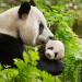 小编与制作人Roy Conli 对谈《我们诞生在中国》探索自然的奥妙