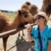 [Darcy愛玩樂] Oasis Camel Dairy可愛駱駝牧場遊記!
