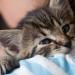 夢幻工作你應徵嗎?愛爾蘭一動物診所職缺是「抱貓」快來看~
