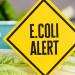 感恩節前夕…美國又爆發蘿蔓生菜大腸桿菌疫情