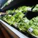FDA: 大家現在可以安心吃蘿蔓生菜了 – 除了來自這幾個地方的之外!