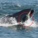 [影] 瞬间被吞!南非摄影师鲸口逃生