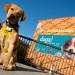 A Science Tail 將於3月16日在加利福尼亞科學中心首次亮相