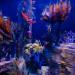 全球最大型之一!稀有海龍展覽登陸南加水族館