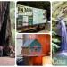 【北加旅遊】紅杉神木環繞的親子兩天一夜