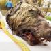影/永凍層冰封4萬年 西伯利亞出土完整巨型狼頭