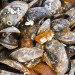 熱浪襲北美最熱6月 加州成千上萬孔雀蛤被「煮熟」