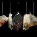 研究:塑料茶包会释出数十亿颗塑胶微粒