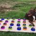 影/超聰明狗狗 靠這個工具學會跟主人「說話」