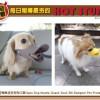 [新品偵查] 鴨嘴造型狗狗口罩