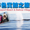 Newport Beach赏鲸之旅一日游攻略