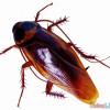 聽都沒聽過~蟑螂小強面膜??