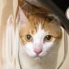 貓臉辨識系統餵食器,讓你追蹤貓咪的飲食狀況!