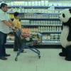 永遠不要對熊貓起司說「不」!