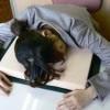 新品偵查-偽裝成一本書的午休睡眠枕