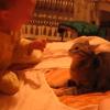 貓vs小孩賞巴掌大戰!