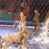 Lviv马戏团公狮暴走兽性大发!