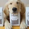 貓咪咖啡館剛剛Pop-up♥洛杉磯第一家狗狗咖啡館正在策劃中♥
