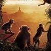 本週新電影介紹:紀錄片【Monkey Kingdom】
