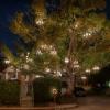 想要做chandelier tree的租客嗎?現在機會來了!只是…