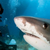 原來平常的自拍比遇到鯊魚更危險?