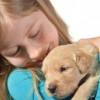 不要再抱汪星人!科学研究表明:狗狗并不喜欢人们拥抱它们!