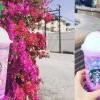 『新品试吃』Starbucks Unicorn Frappuccino。独角兽星冰乐~尝起来纠竟如何??