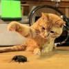 [動物溝通師 Irina] 聽動物溝通師聊動物(五)天吶!那個不能吃! 有異食癖的孩子們。