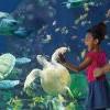 爸爸万岁! 圣地牙哥海洋世界 Sea World 推出父亲节优惠!