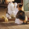 [影片]貓咪與小雞展現友情,唯美畫面超療癒! 最後結局卻令人感傷啊~