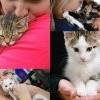 PetSmart Charities National Adoption Weekend 全國毛小孩認養週 (11/8-10)