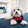 这家加州酒店太暖心了~提供治疗犬陪伴客人服务!
