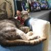 【哇靠搶先報】狗奴小編初體驗: 勇闖30隻貓貓大本營! CatCafe Lounge開幕囉!
