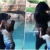 [影片] 史上最萌小孩动物互动被拍下!熊熊跟着5岁男孩一起跳太可爱了