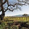 全美十大最佳葡萄酒產區排行榜公佈!