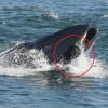 [影] 瞬間被吞!南非攝影師鯨口逃生