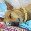 毛孩偷舔醬汁「洋蔥中毒」亡 10種狗不能吃的食物