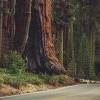 安全考量!Sequoia National Park建設訊號塔不再「與世隔絕」