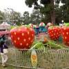 Garden Grove Strawberry Festival 草莓嘉年華 (5/24-27)