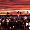 期間限定浪漫燈海!「原野星光展 Field of Light」加州延長展出