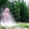 影/美洲野牛撞飛女童!黃石公園證實影片為真