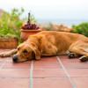 不只巧克力對狗有毒 FDA 呼籲飼主注意木糖醇食品