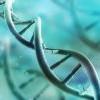 基因造成拖延症? 報告:只影響女性