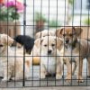 Clear the Shelters™ 第五届宠物领养活动 (8/17)