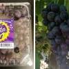 吃起来像Grape Soda?新品种葡萄指定超市独家发售