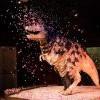 洛杉矶自然历史博物馆呈献:Dino Fest 恐龙节 (9/21-22)